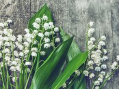 Toxic House Plants - Lily of the Valley